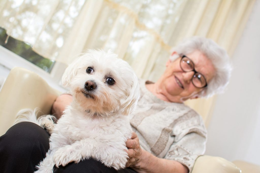 Pets & Pet Paraphernalia